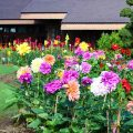 Grange Landscaping