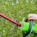 O Mahony Tree Specialists