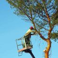 SS Tree Services
