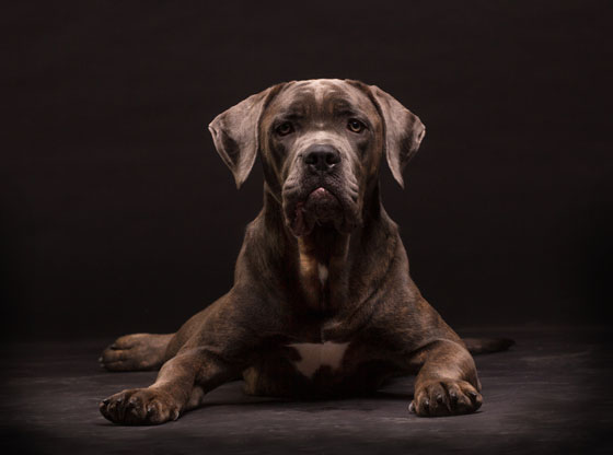 Must-Love-BIG-Dogs-–-Chunki