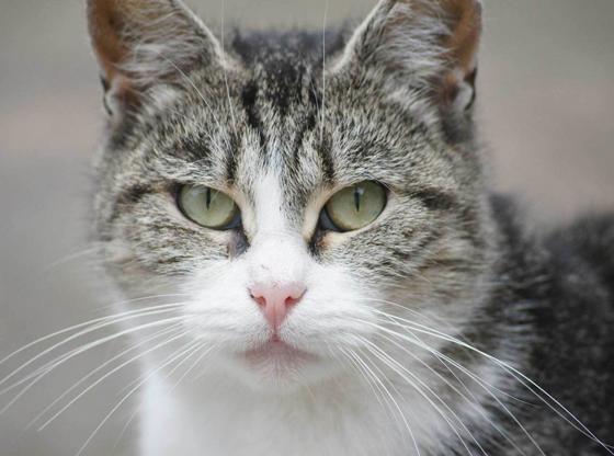 Pet Sitting – Irish Rosettes Pet Store