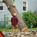 Dublin's Premier Tree Surgeons – Shaw Tree Services