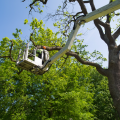 Domestic and Commercial Services – O'Kennedy Tree Care