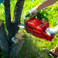 What Makes Expert Tree Surgery and Hedge Cutting?- Kennedy Tree Service