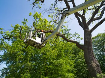 Professional and efficient Tree Surgery and Garden Maintenance -- Ashwood Tree Services
